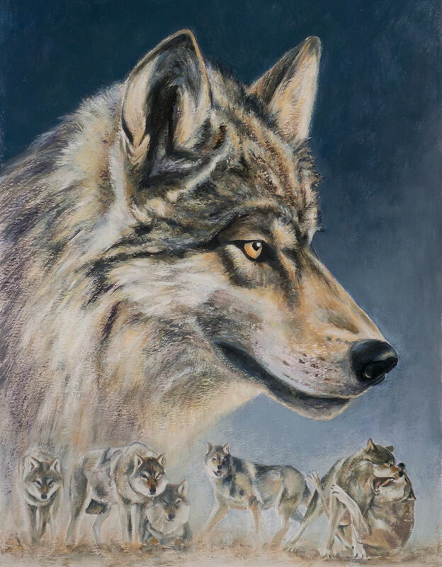illustrative gouache painting canis lupus