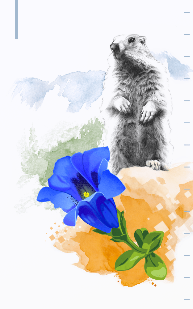 Mixed-media illustration of alpine wildlife with fauna and flora